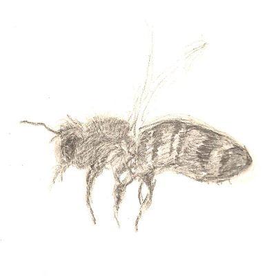 Bee by Leila Lees Lasavia Healing