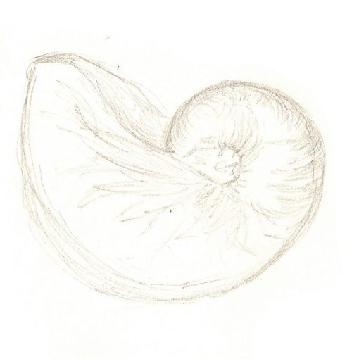 Chambered Nautilus by Leila Lees Lasavia Healing