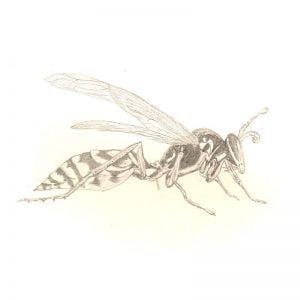 Paper wasp by Leila Lees Lasavia Healing